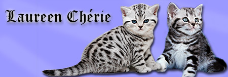 Britské kočky Laureen Chérie